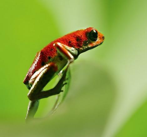 David Attenborough ile Yaşamın Renkleri bambaşka bir dünya sunuyor!