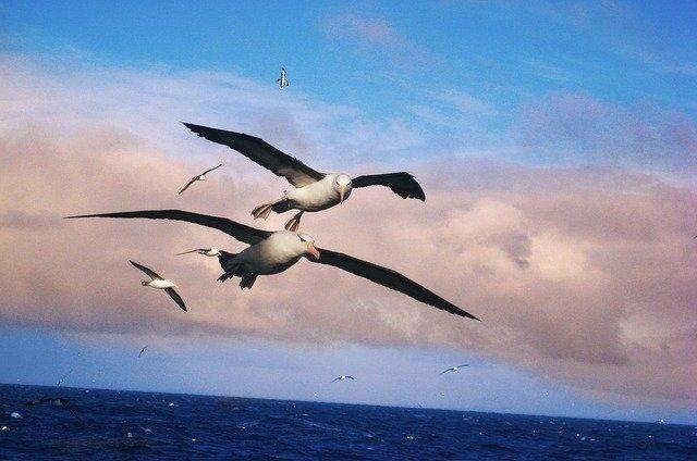 18-07/03/albatros-kusu.jpg