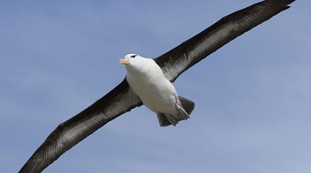 18-07/03/albatros-nerede-yasar.jpg