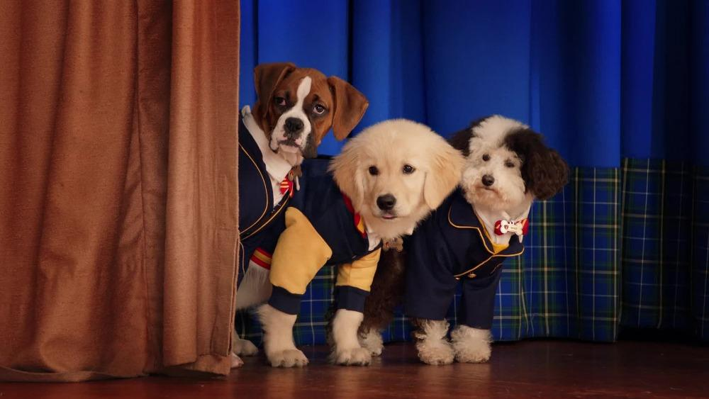 20-12/15/pup-academy.jpg